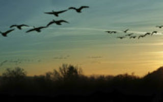 Уж небо осенью дышало… (Пушкин)