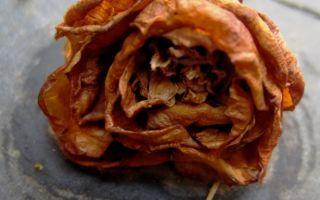 Цветок (Цветок засохший, безуханный…) — А.С. Пушкин