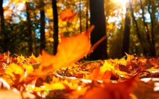 19 октября («Роняет лес багряный свой убор…»), Пушкин