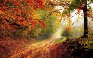 Картины природы в романе «Евгений Онегин»