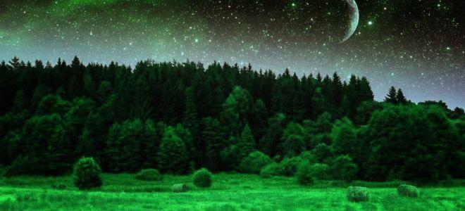 «Он рощи полюбил густые, уединенье, тишину, и ночь, и звезды, и луну…»