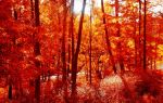Анализ стихотворения «19 октября» (А.С. Пушкин)