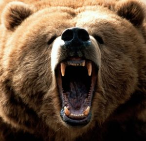 Дефорж и медведь