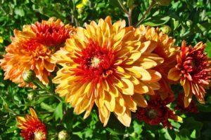 Цветы осенью
